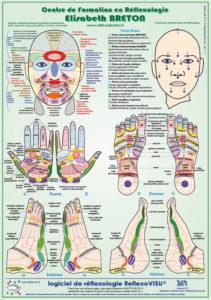 réflexologie Zones réflexes