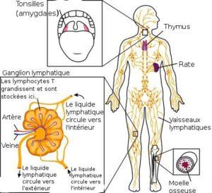 drainage lymphatique réflexologie